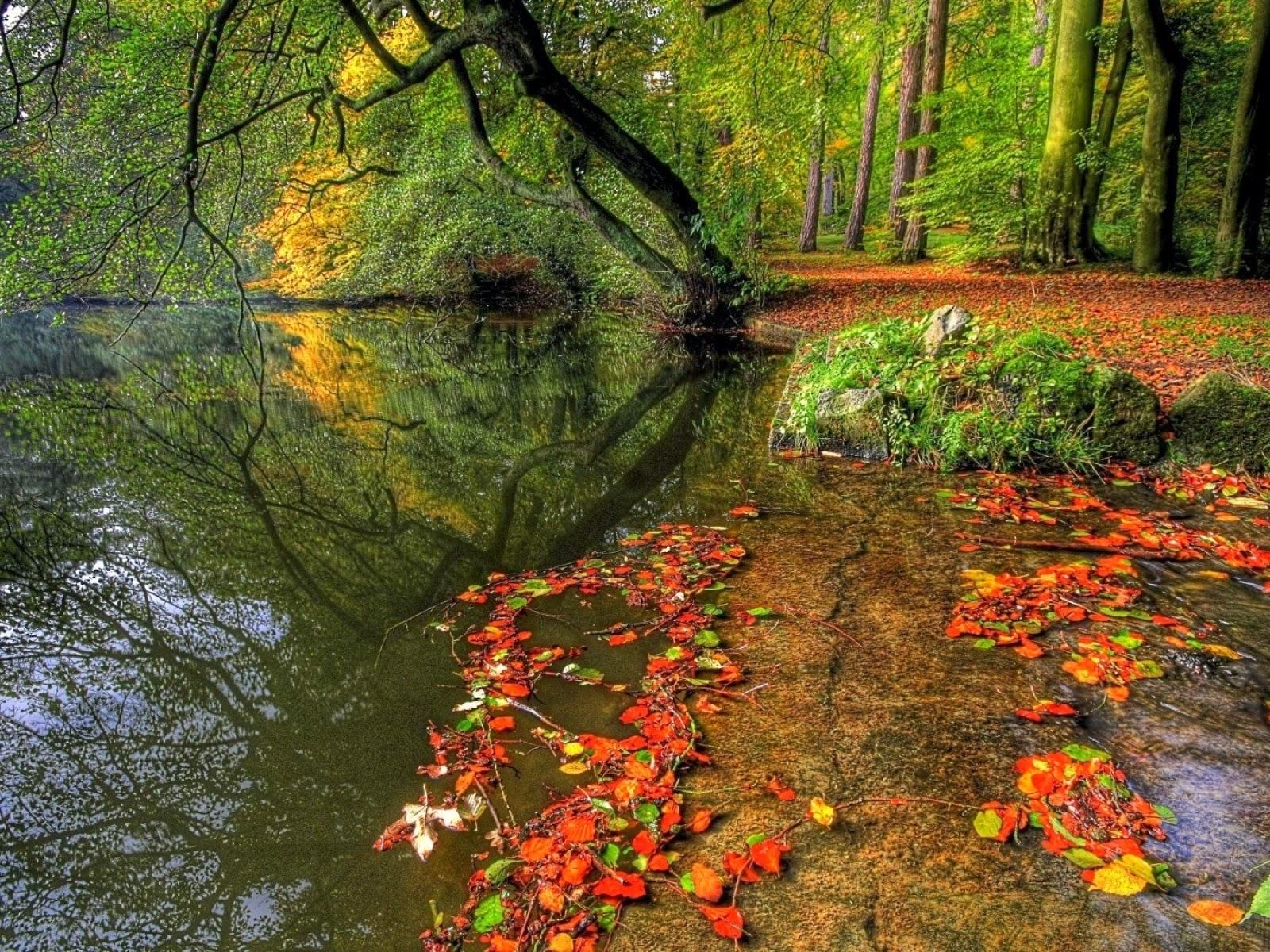 Bonito otoño bosque Riverside