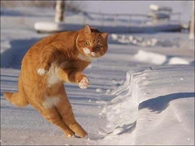صورة قطة ترقص