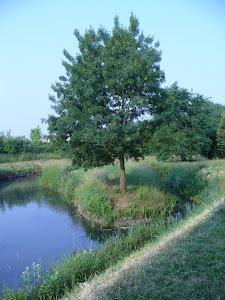 Il Draganziolo d'estate