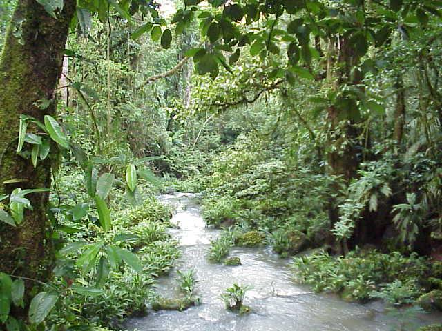 african rainforest animals zoo animals