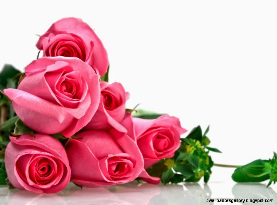 Pink Roses Flowers Widescreen Wallpaper