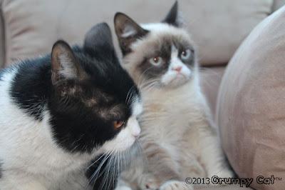 Foto-foto Grumpy cat 02