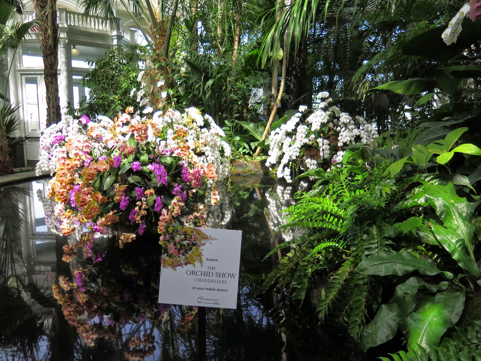 Ciao domenica april 2015 inside the conservatory we were greeted by floating islands of orchids mozeypictures Gallery