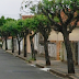 Grande número de pedidos para retirada de árvores urbanas preocupa do Departamento de Meio Ambiente