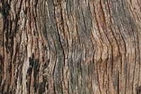 free natural tree texture