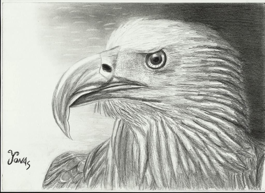 Imagenes de dibujos de aguilas a lapiz - Imagui