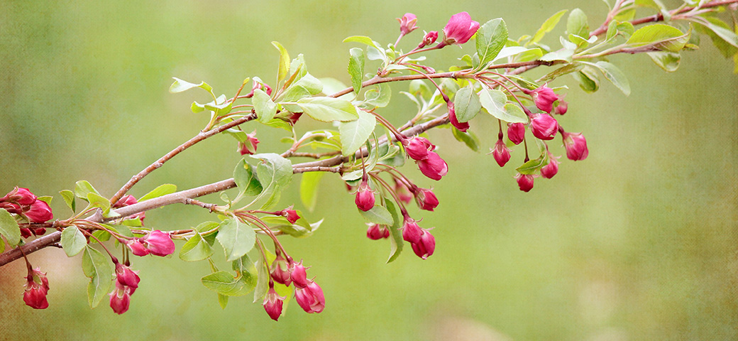 Berry Blooms