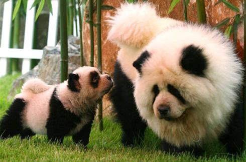 ANIMALS WALLPAPERS: giant panda cool facts ,Panda Kids - Fun Facts ...