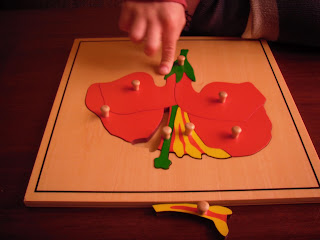 puzzle botánica montessori - flor