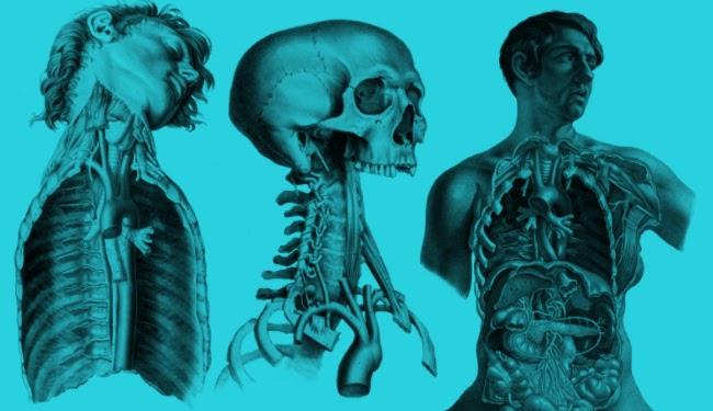 Necropsia anatomo - patologica