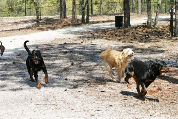 Dogs park - North Myrtle Beach Park & Sports Complex