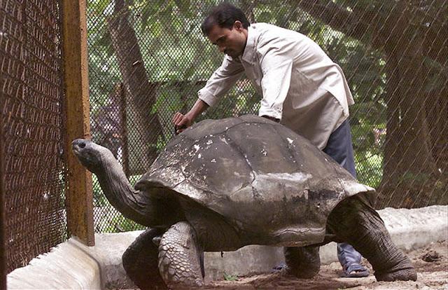 Hewan hewan yang usianya bisa ratusan tahun....!!!
