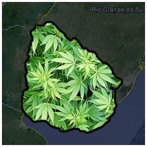 primeiro país a legalizar a maconha