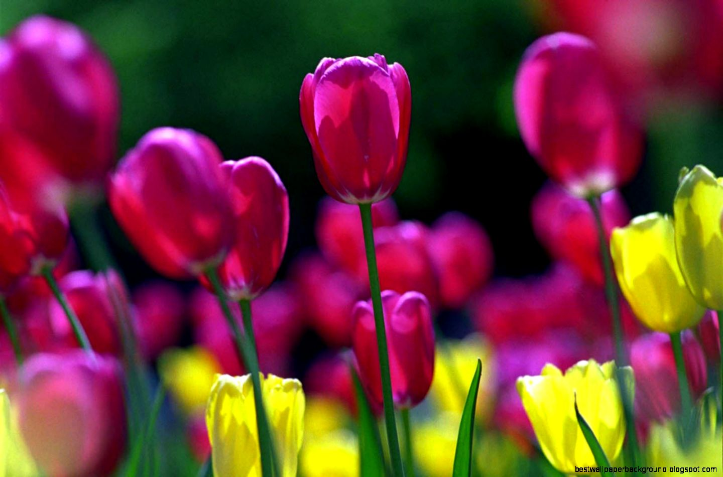 Spring Flowers Background Best Wallpaper Background