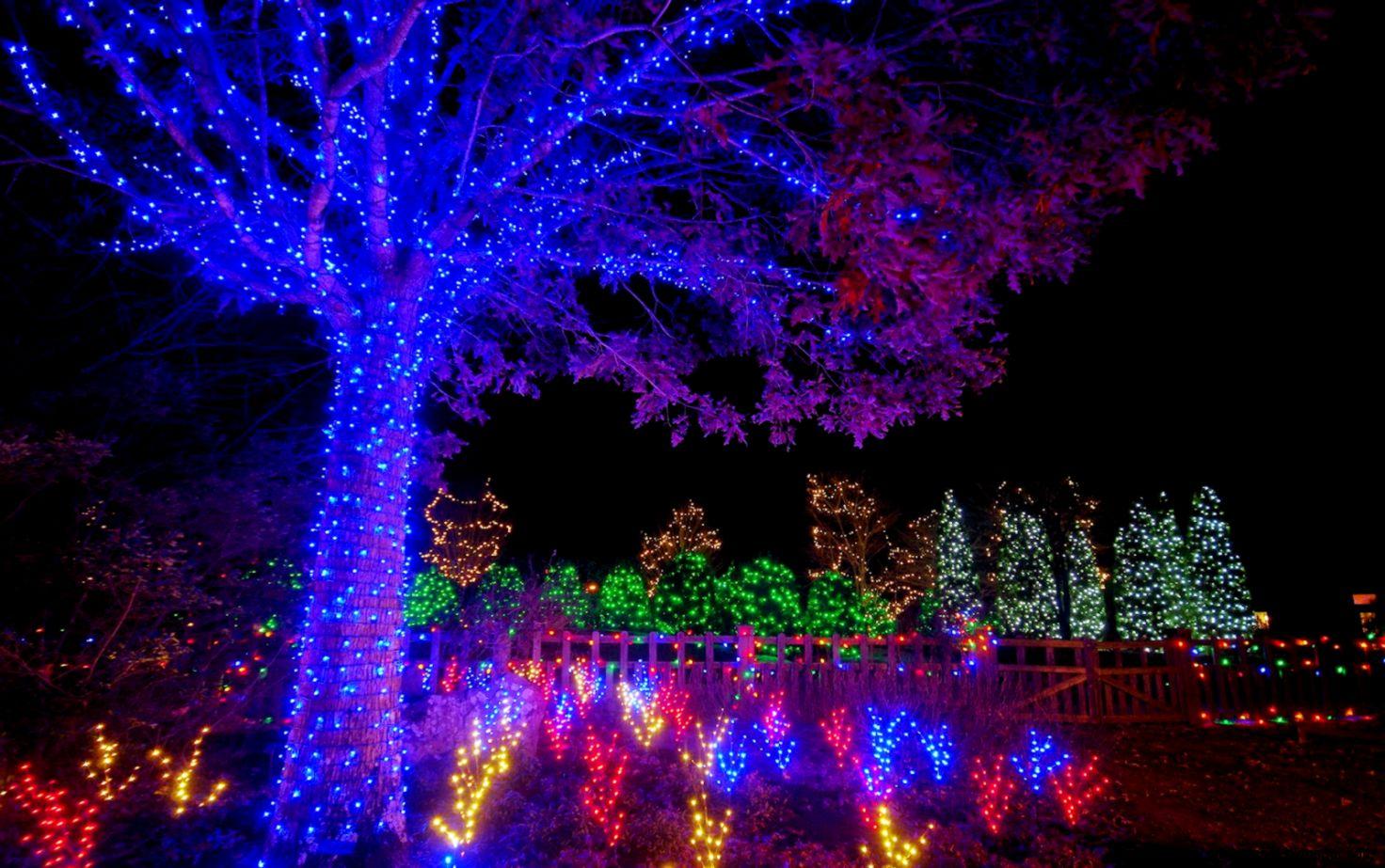 Winter Lights Dazzle the  Arboretum