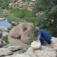 Ditemukan Ular Naga Terbesar di Dunia,NE PENAMPAKANNYA
