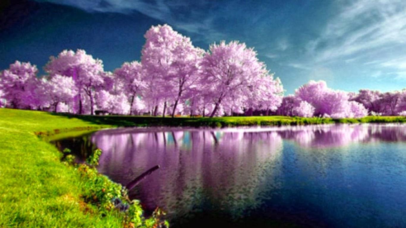 beautiful spring trees wallpaper - photo #10