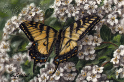 Canadian Tiger Swallowtail Butterfly Painting in pastel by Canadian wildlife artist Colette Theriault
