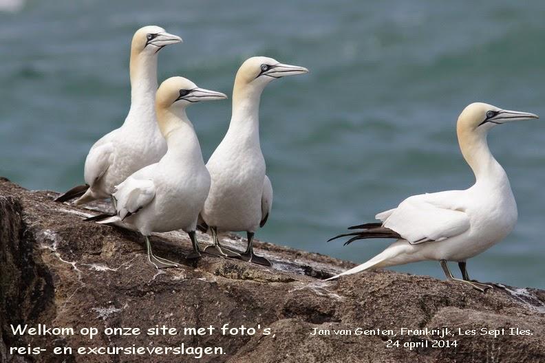 De Vogelaars