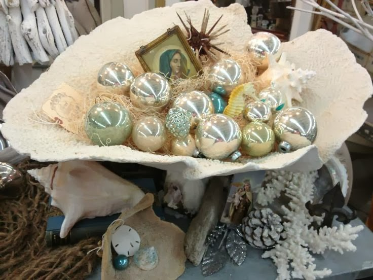 Everything Coastal A Sea Shell Display For The
