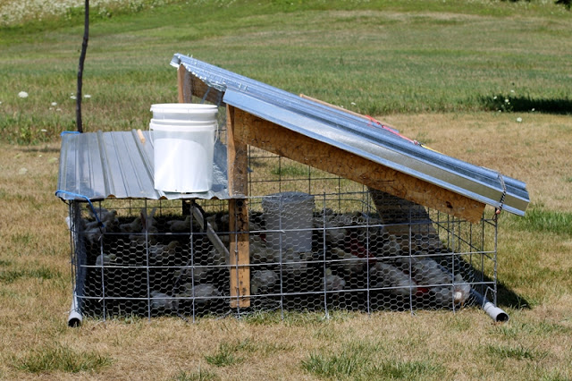 Broiler chicken tractor