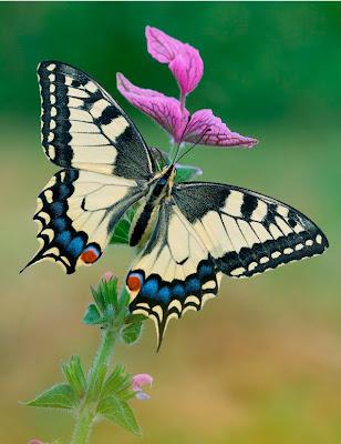 Mariposa de colores sobre las flores silvestres