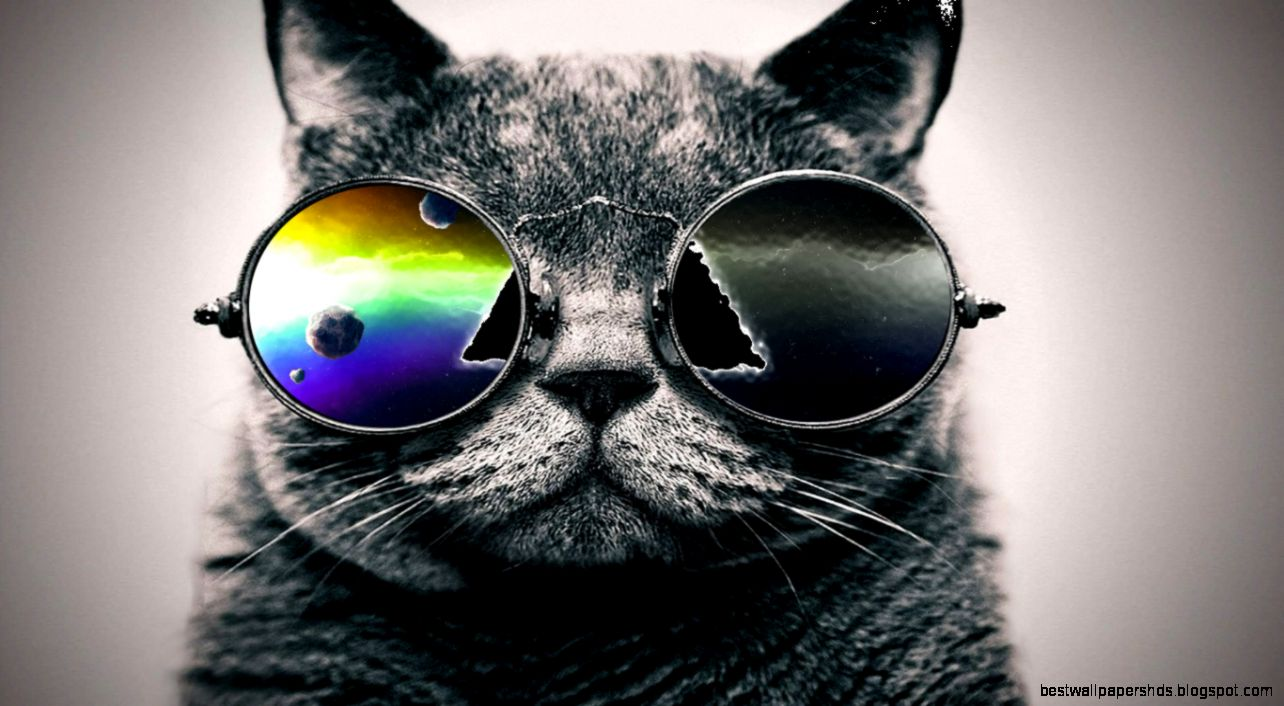 cat cool wallpaper best wallpaper hd