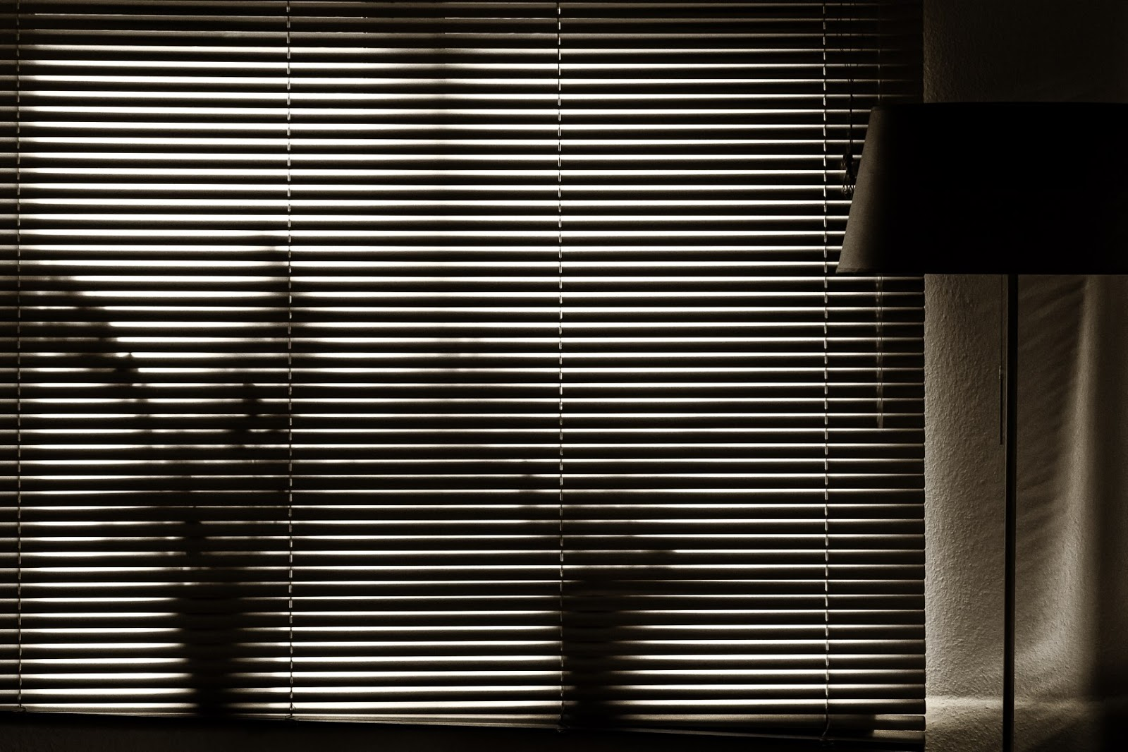 Matthew G. Beall vision driven black and white photography  Plants. Window Blind. Lamp. 2014