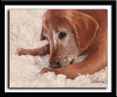 Golden Retriever Portrait Pastel Painting
