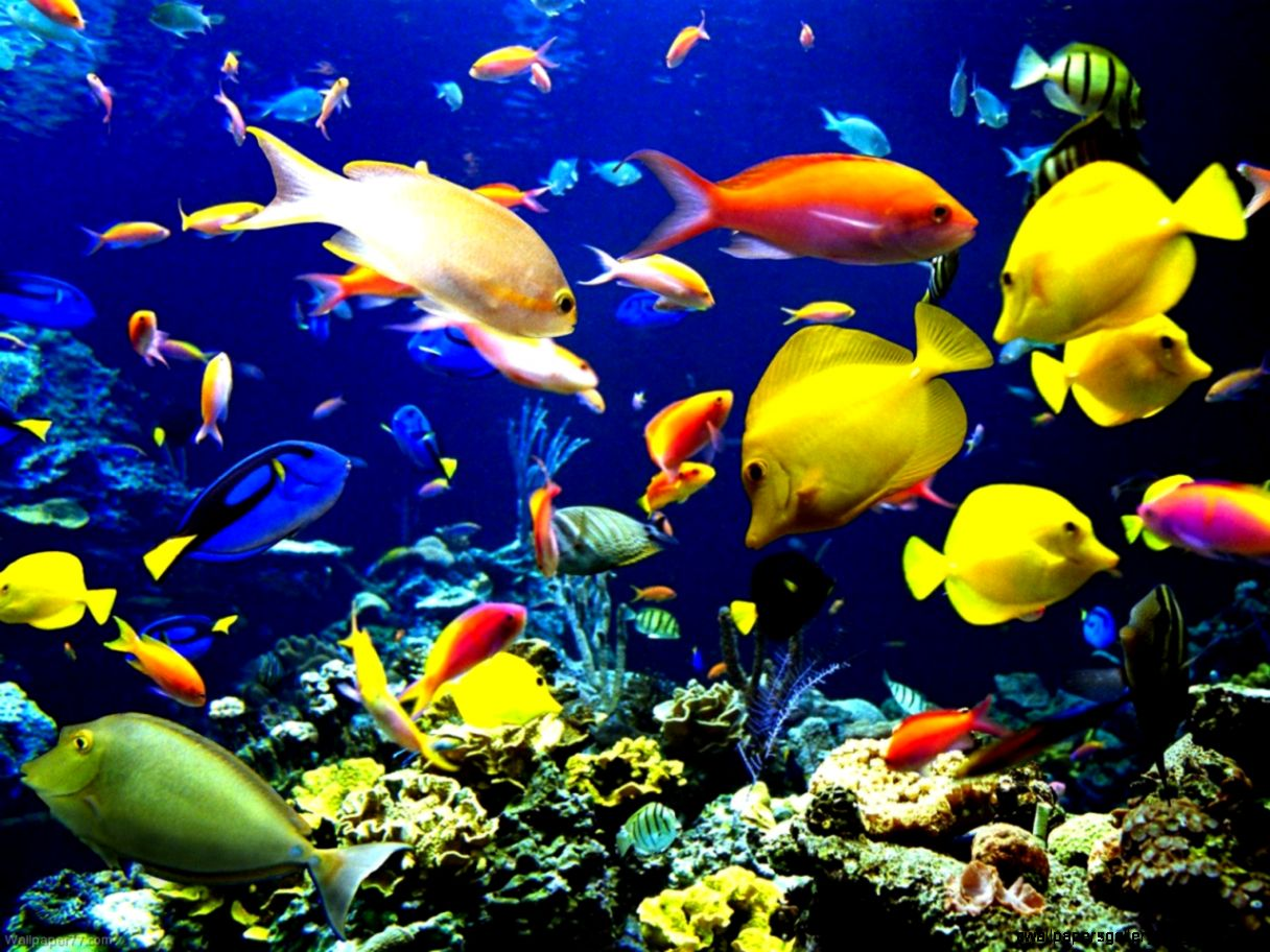 Tropical Beach Fish  Amazing Wallpapers