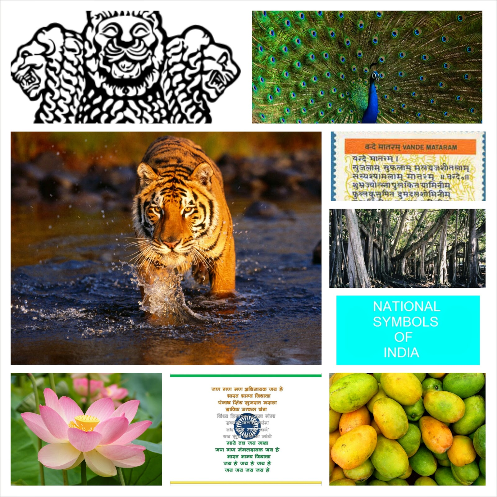 National Symbols Of India And Their Meaning National Symbols Of