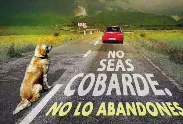 ¡NO SEAS COBARDE NO LO ABANDONES!