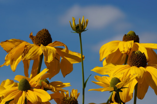 Sommerbluimen