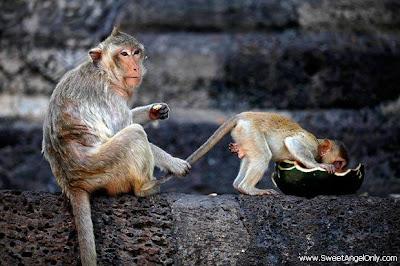 funny_picture_funny_monkeys_pulling_tail_vandanasanju.blogspot.com