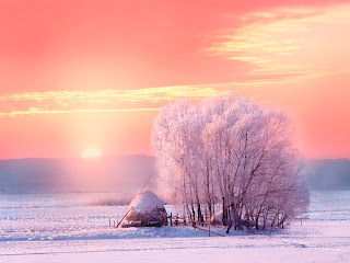 Amazing Snow Trees/House and Orange Sky