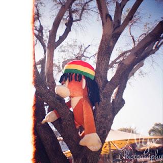 Monkey in a tree, Northbridge Piazza