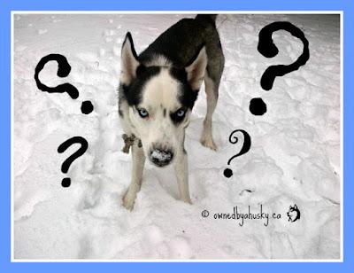 Adopting SIberian Huskies