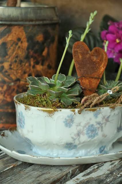 salsera y planta