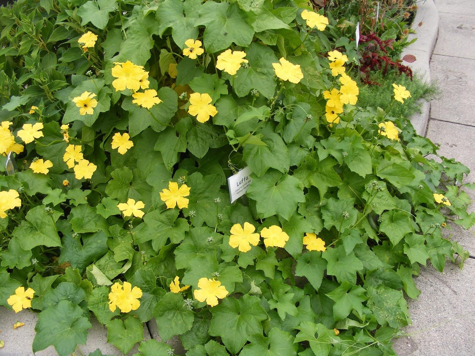 Flower Garden Eaton Rapids Michigan: Eaton Rapids Joe: Gardens