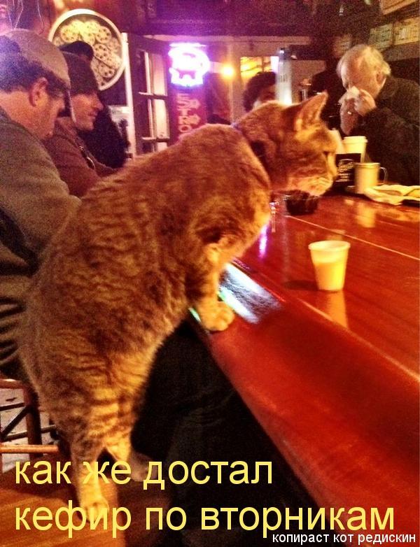 Кот в баре: как же достал кефир по вторникам