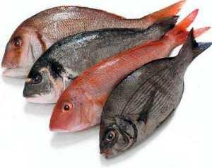 dieta-alimentar-calorias-peixes