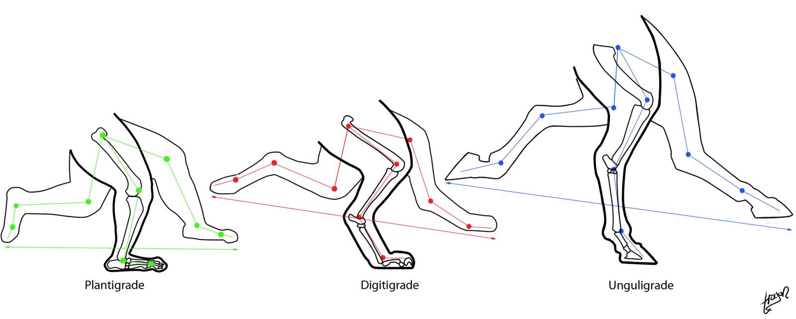 [Obrázek: locomotion+across+classes2.jpg]