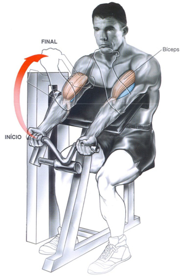 strong&ripped: anatomia biceps