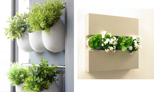 Alba hogar plantas para colgar for Plantas en el hogar