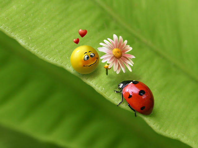Best Jungle Life ladybug love, flower