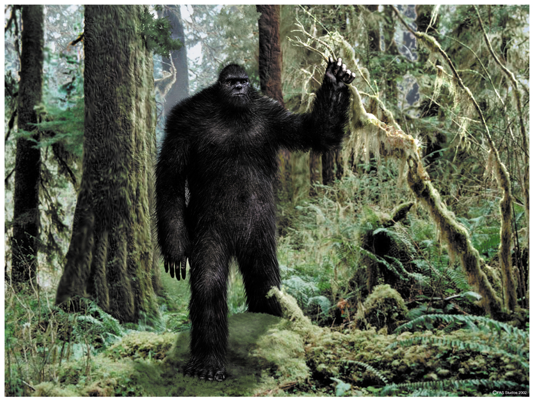 Washington State Woman Starts Bigfoot-Tracking Club | Bigfoot Research News