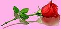 Bơ Vơ Phận Già - Vui Sống với Tuổi Già  Hinh+Rose