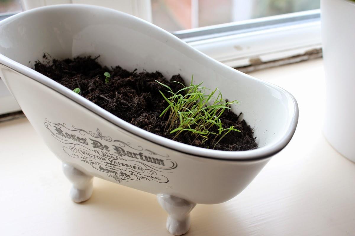 plants, herbs, spring activities, garden, todaymyway.com