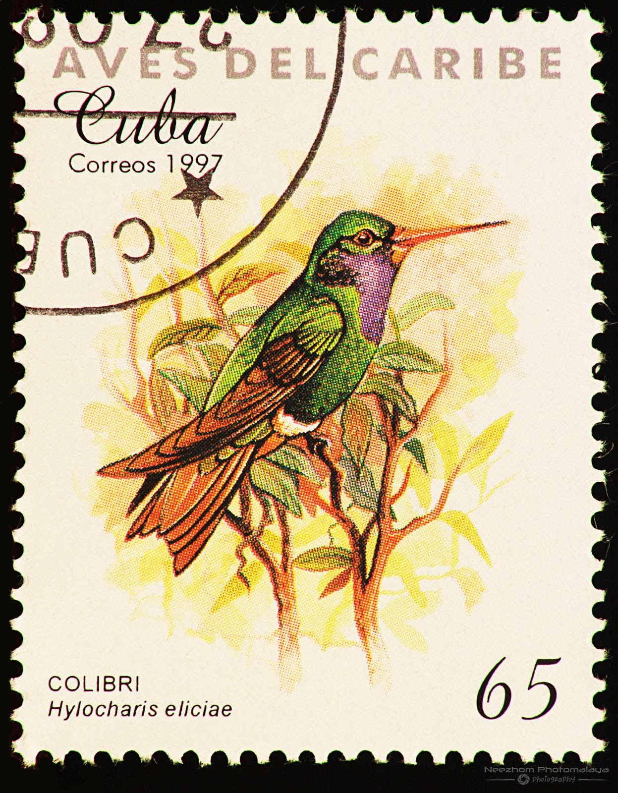 Cuba 1997 Birds of the Caribbean stamp - Blue-throated Sapphire (Hylocharis eliciae) 65 c