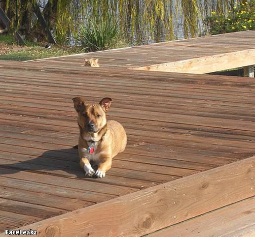 21 Foto Yang Harus Anda Lihat Setelah 21 Mei 2011 Berlalu - 15. Foto kucing mengintip anjing